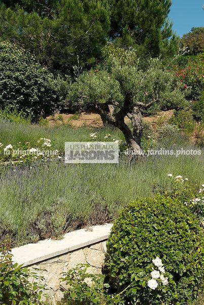 La Phototheque Les Plus Beaux Jardins Massif Sureleve Lavande