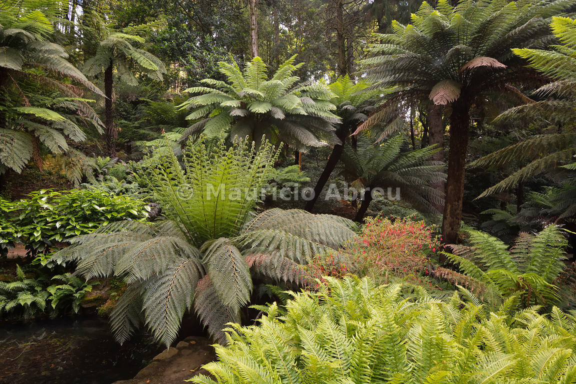 Images of portugal ferns in the condessa d 39 edla gardens - Natura portugal ...