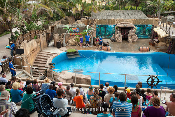 Photos and pictures of: Seal show at uShaka Marine World ...