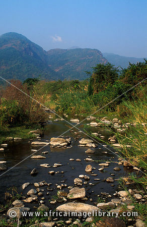 stream rising in the Mahale mountains and flowing to Lake Tanganyika , Mahale Mountains National Park, Tanzania