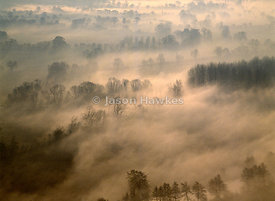 Fog in Berkshire