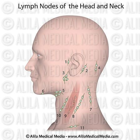 alila medical media lymph nodes of the head and neck