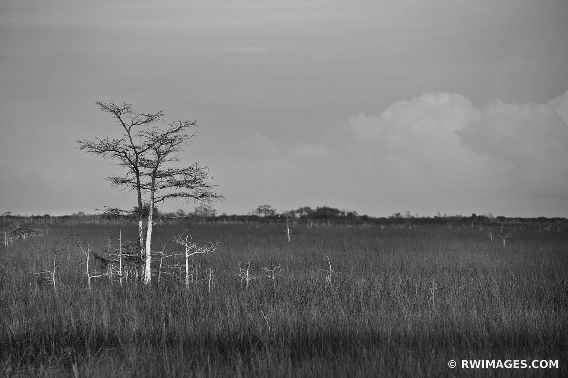 Photo print of dwarf cypress and sawgrass prairie pa hay for Fine art photography sales
