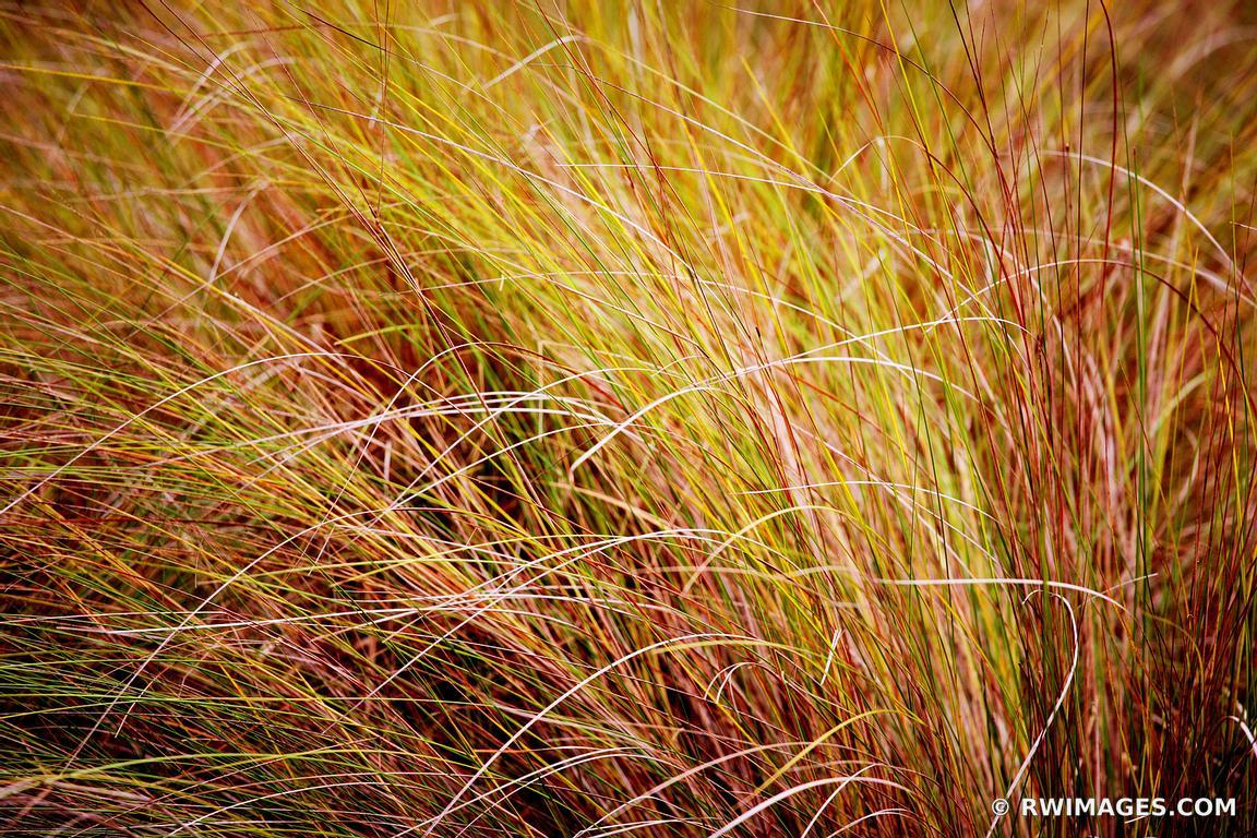 Photo Print of MARSH GRASSES CUMBERLAND ISLAND GEORGIA Print Framed ...