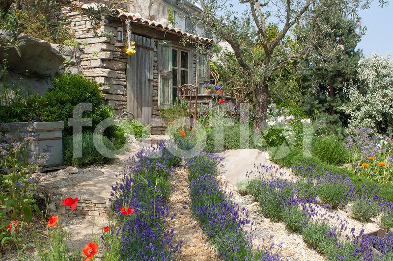 Photo De Jardin Mediterraneen Ambiance Jardin Provencal Fotoflor