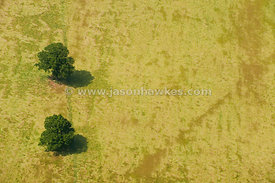 Aerial view of trees in field