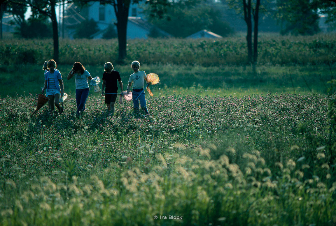 Ira Block Photography Children Catch Fireflies In A Field At Dusk