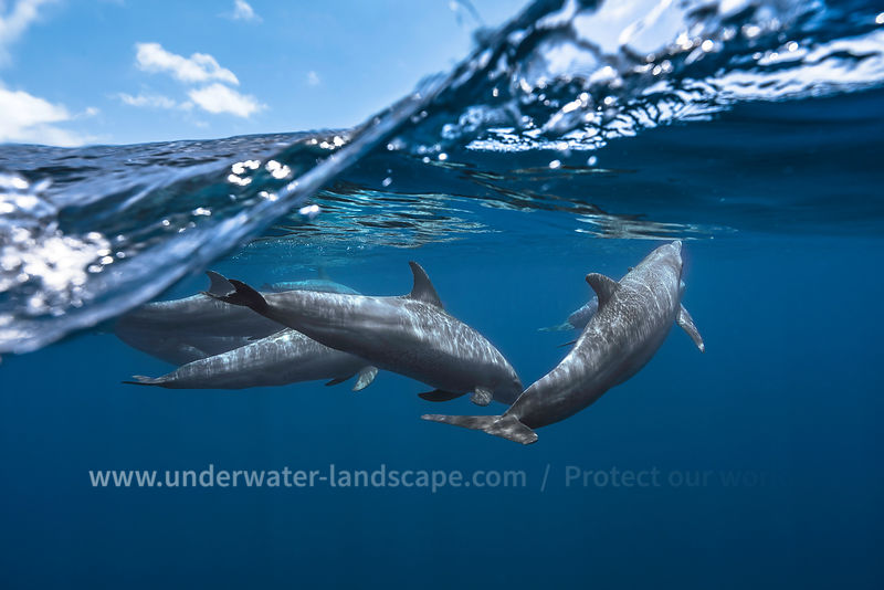 id air mid water with the dolphins offshore (Turciops aduncus) .  Photo taken in Mayotte, behind the barrier near the Longonie pass.