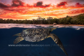 sea turtle-underwater-turtle photography