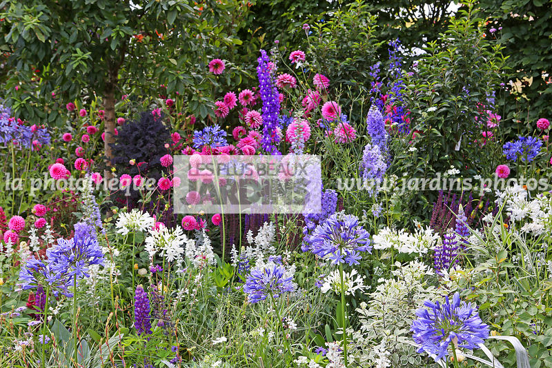 la phototh que les plus beaux jardins massif vivace bulbe agapanthus delphinium lupinus. Black Bedroom Furniture Sets. Home Design Ideas