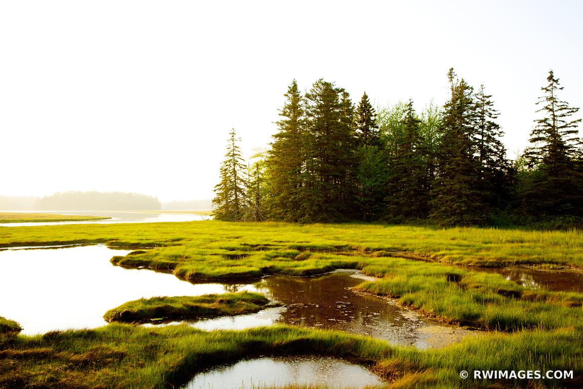 Photo print of pretty marsh area acadia national park for Fine art photography sales