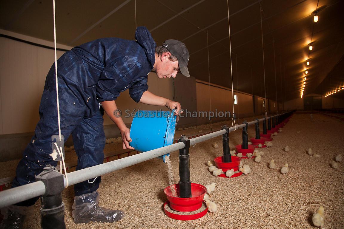 Photographie fils d un eleveur dans un poulailler for Quel sol pour un poulailler