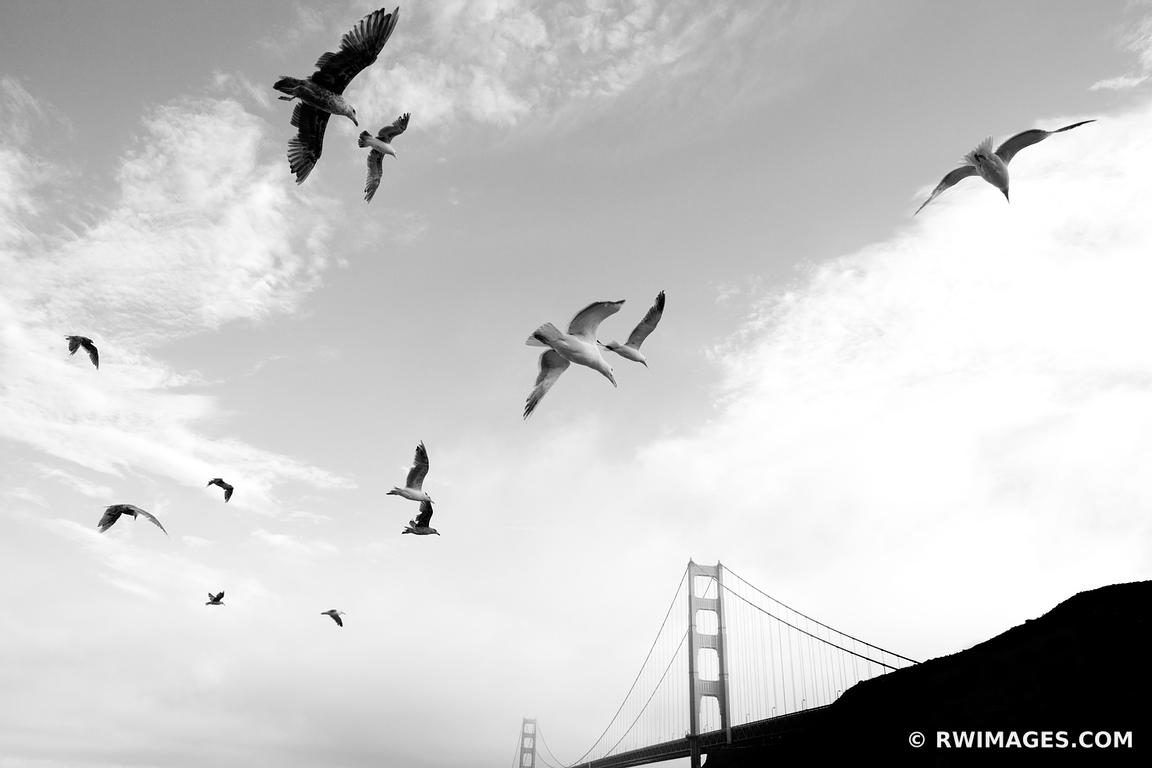 Photo print of seagulls sunset golden gate bridge san for Buy fine art photography