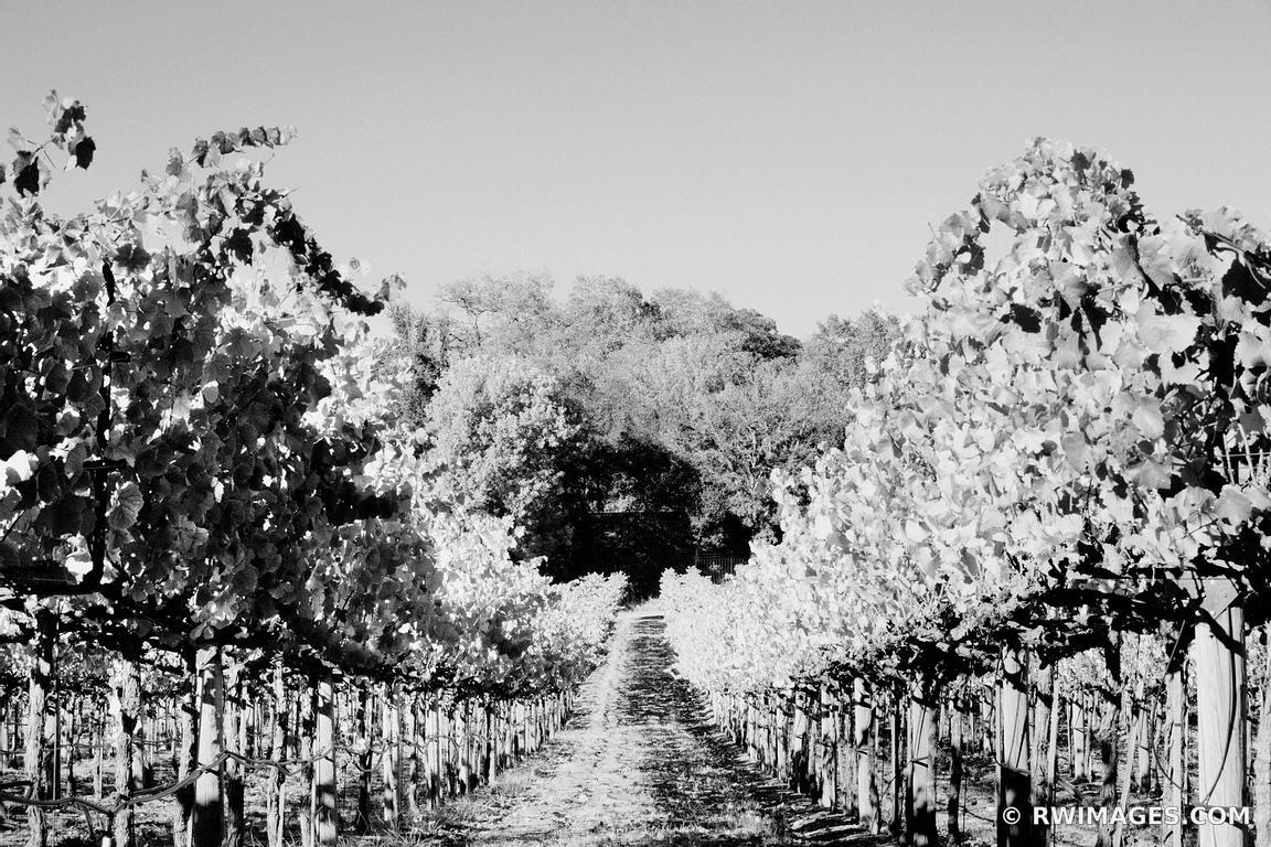 Vineyard napa valley california black and white