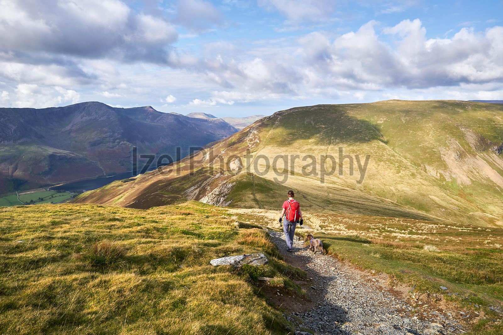 A hiker descending from Hindscarth towards the summit of Robinson in the Lake District, England, UK.