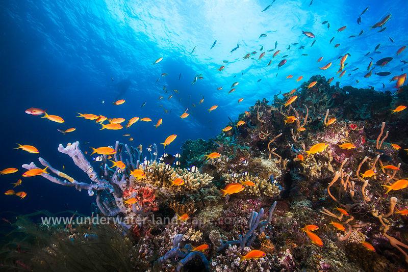 Photo plongée sous marine-Anthias-Ambiance dans le lagon de Mayotte