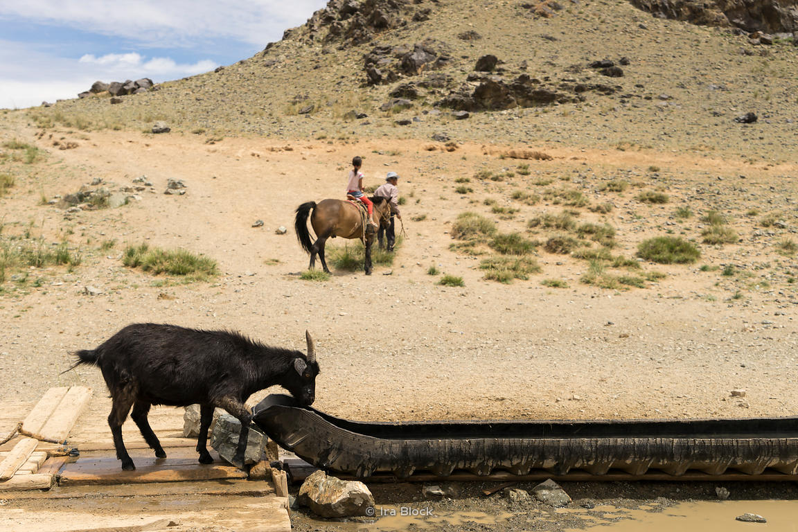 ira block photography a goat drinking water in south gobi desert