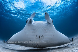 rays-underwater photography