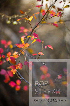 Autumn leaves on bush, Gila Cliff Dwellings National Monument, Catron County, New Mexico, USA