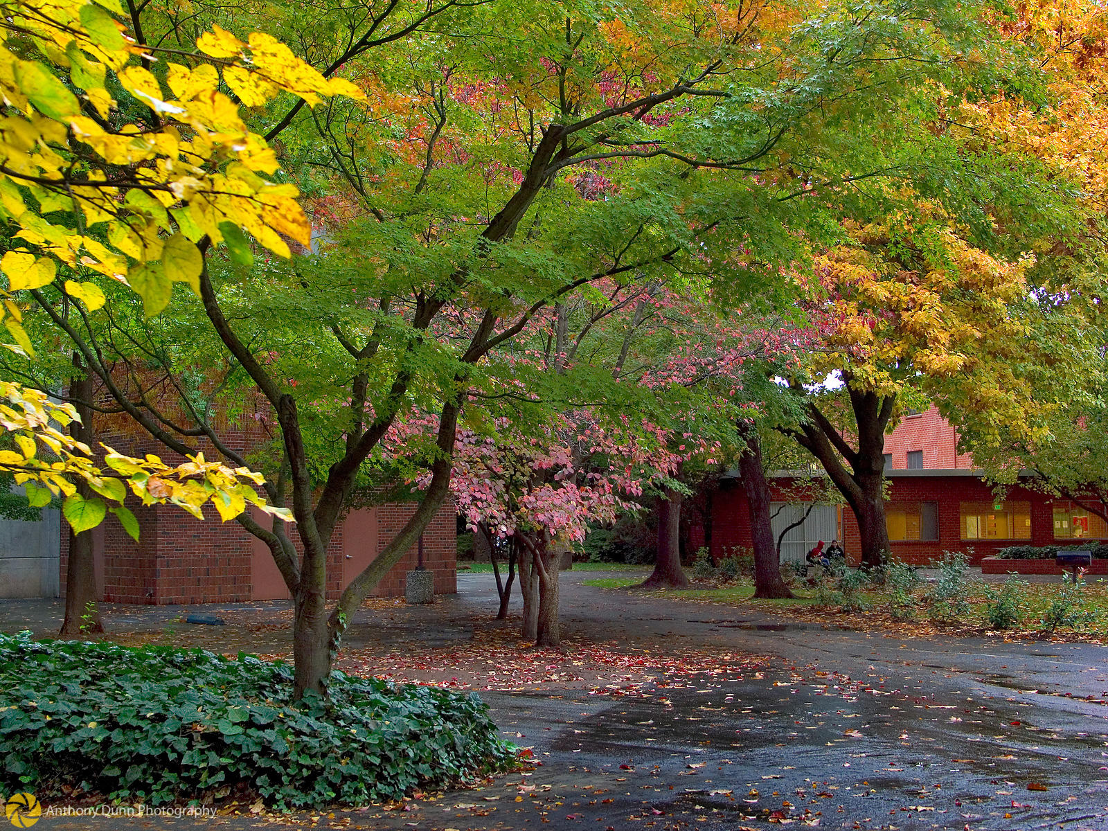 Anthony Dunn Photography | Fall Colors at Chico State #7