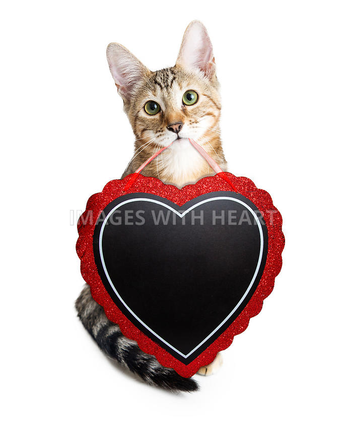 Images With Heart Cute Kitten Carrying Heat Valentines Day Sign