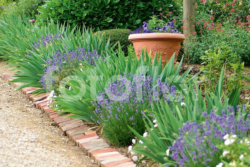 fotoflor toutes les photos et images de plantes fleurs jardins sur le th me sc nes de jardin. Black Bedroom Furniture Sets. Home Design Ideas