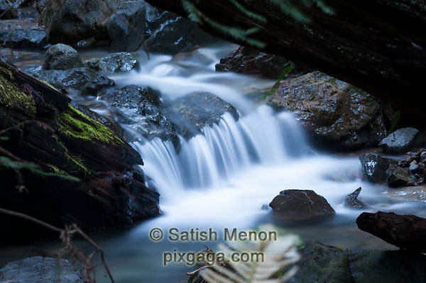 Waterfall, Fern Creek, Muir Woods, CA, USA