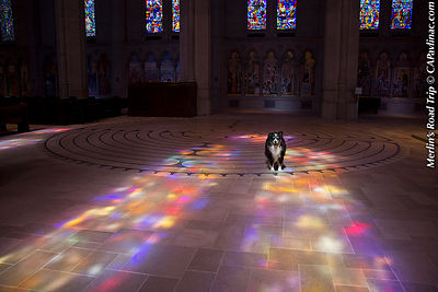 Merlin in Grace Cathedral Labyrinth, Feast of St Francis, San Francisco