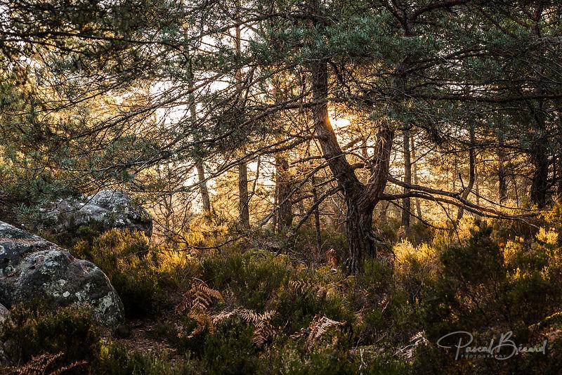 PBE-2014-03-09-2014-03-09_-_Forêt_de_Fontainebleau-8389