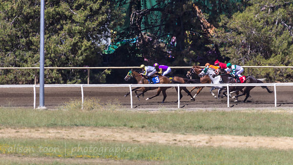 Race six, Sacramento card at the California State Fair