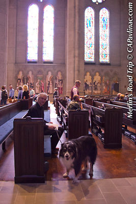Merlin Receiving St Francis Day Blessing of the Animals in Grace Cathedral, San Francisco