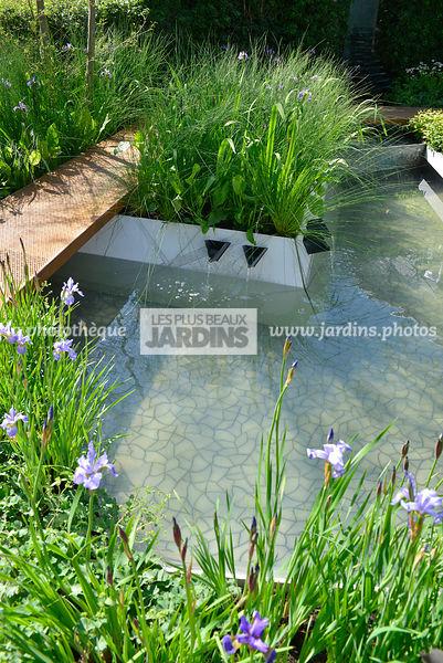 plante aquatique bassin laitue deau pistia stratiotes plante aquatique flottante de bassin with. Black Bedroom Furniture Sets. Home Design Ideas