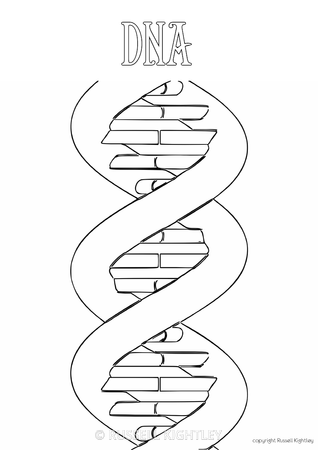 dna structure coloring pages - photo#16