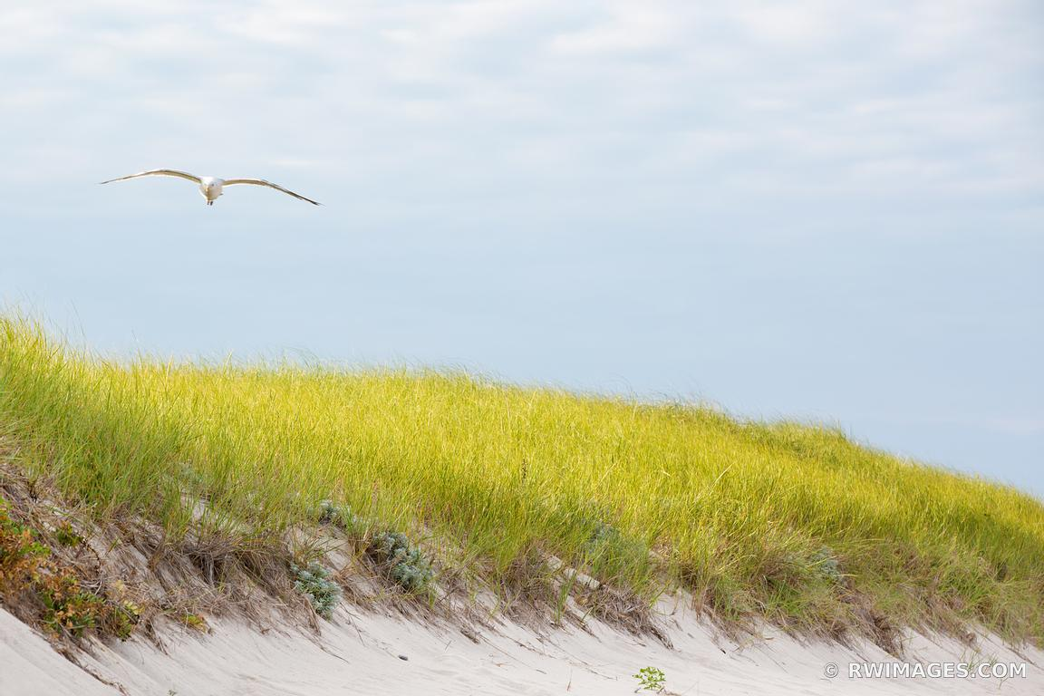 Photo Print of SEAGULL BEACH DUNE GRASSES NANTUCKET ISLAND COLOR ...