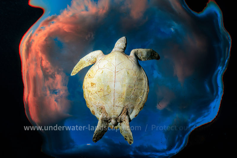 flying sea turtle picture in the mayotte island lagoon