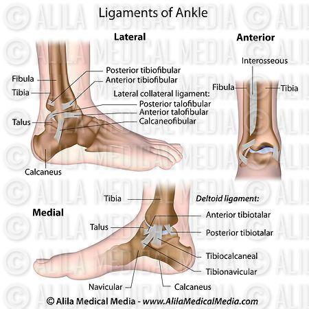 Alila Medical Media   Ligaments of ankle labeled.   Medical illustration