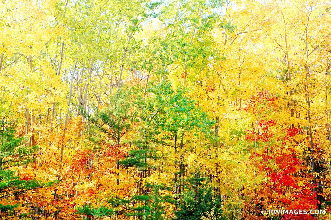 Photo print of autumn forest door county wisconsin fall for Large photographic prints for sale