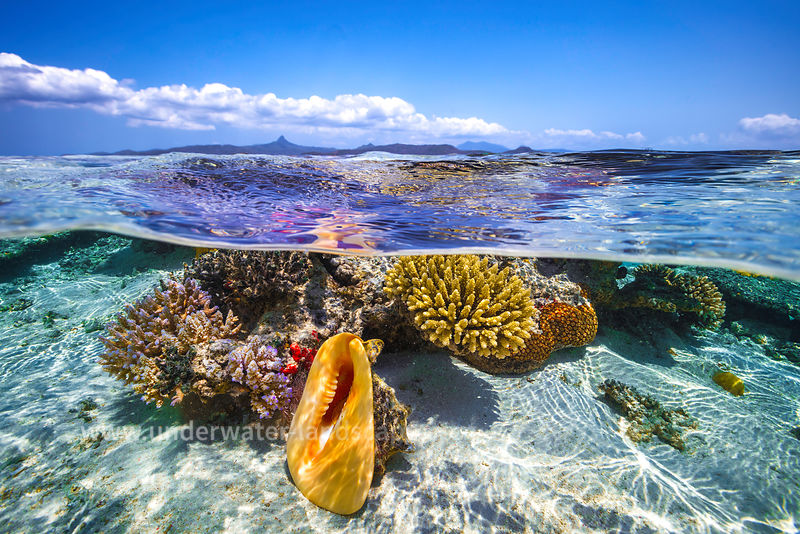 picture of reefs in the lagoon in Mayotte island