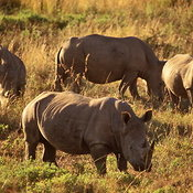 Rhino Conservation photos