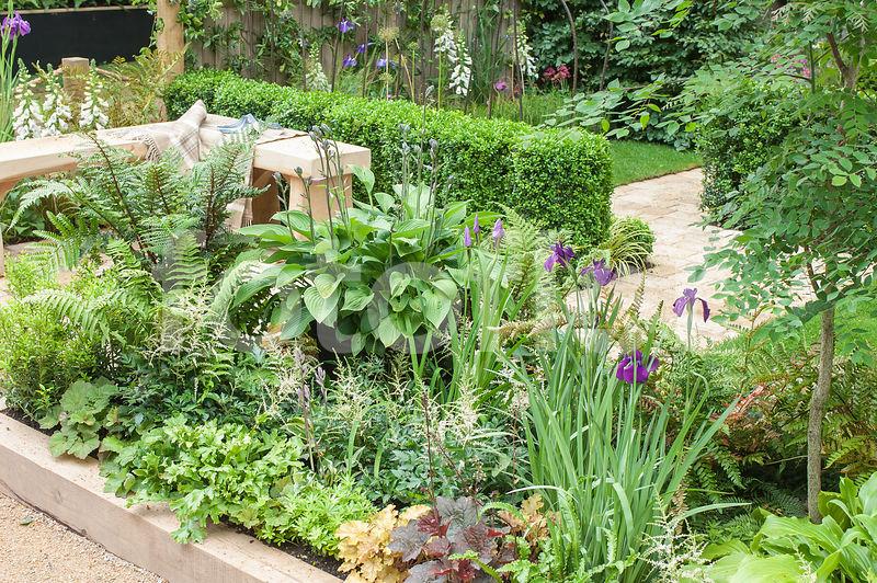 Photo de Vivaces d\'ombre en massif, petit jardin de ville - fotoflor ...