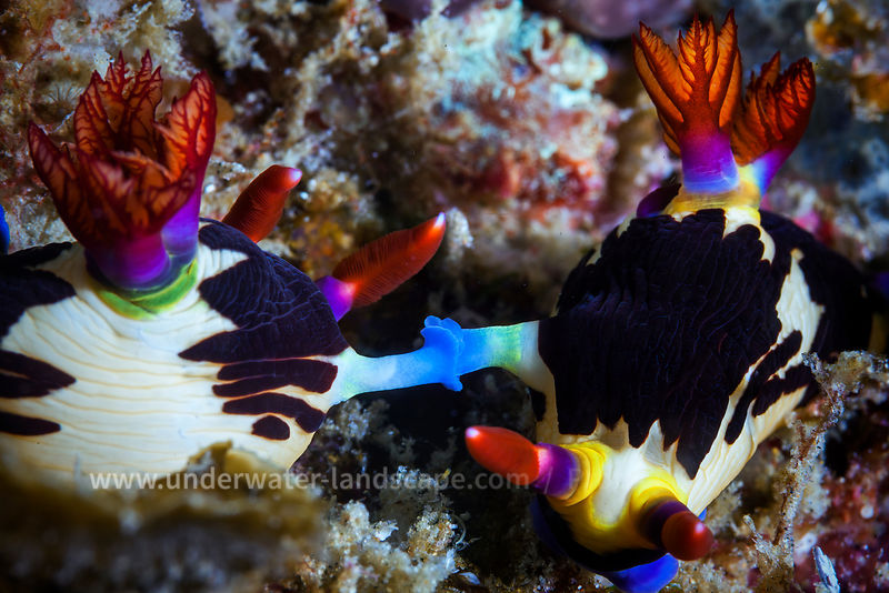 Mozambique under water: scuba diving photography-fauna and flora-Connection between multicolor fish