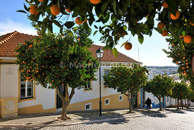 Orange trees in the streets of the historical village of Avis, Alentejo. Portugal