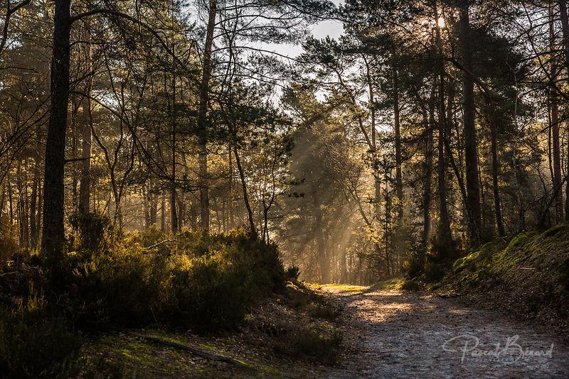 PBE-2014-03-09-2014-03-09_-_Forêt_de_Fontainebleau-8426