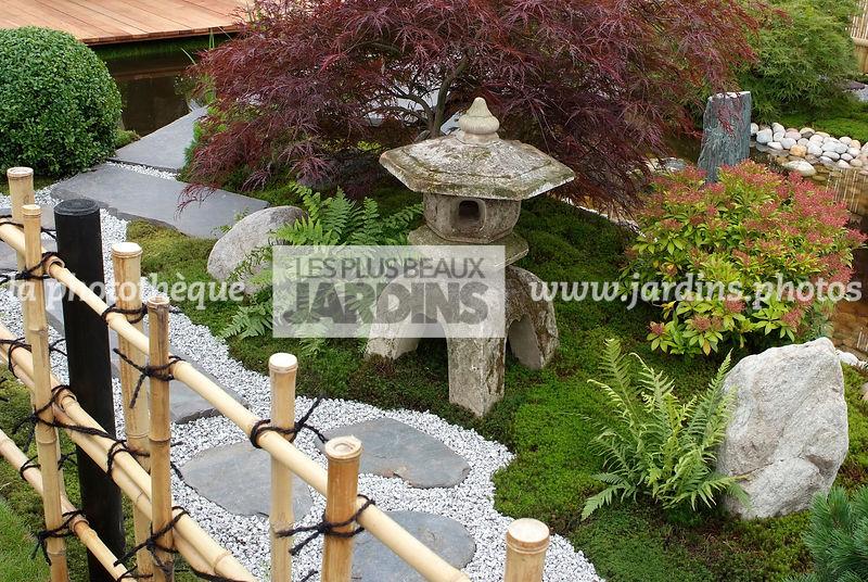 plante grimpante jardin japonais