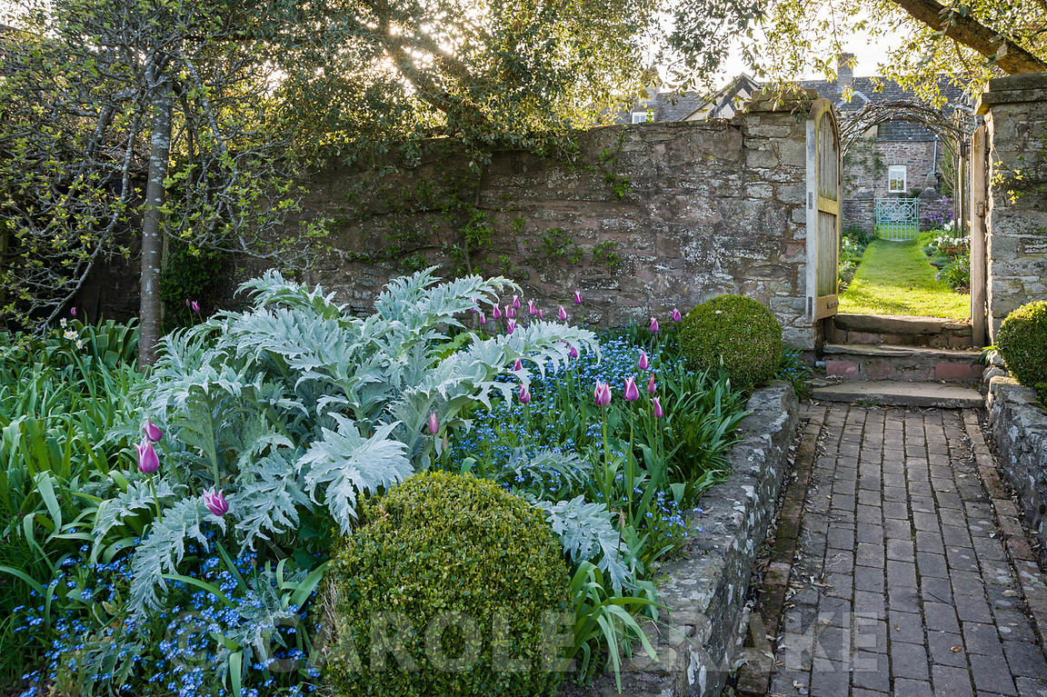 Carole Drake View From Kitchen Garden Into The Cutting Garden Past