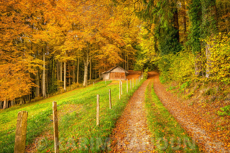Mont Pèlerin - Autum path to abandoned hut