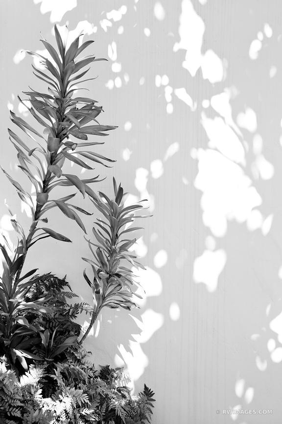 Photo Print of BOTANICAL BLACK AND WHITE SANTA BARBARA CALIFORNIA ...