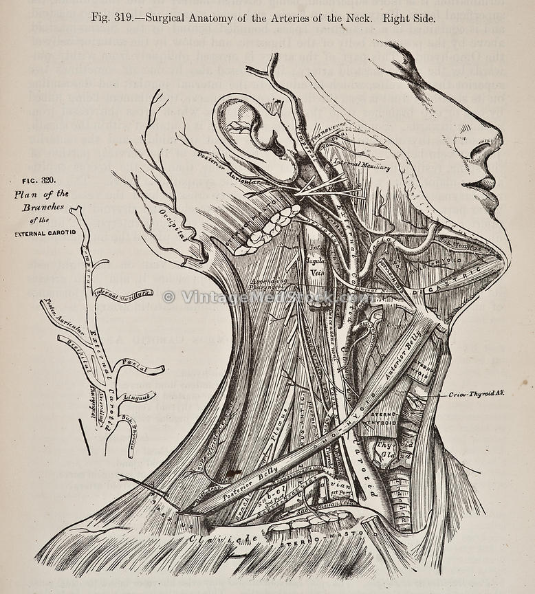 leonardo da vinci anatomical drawings book pdf
