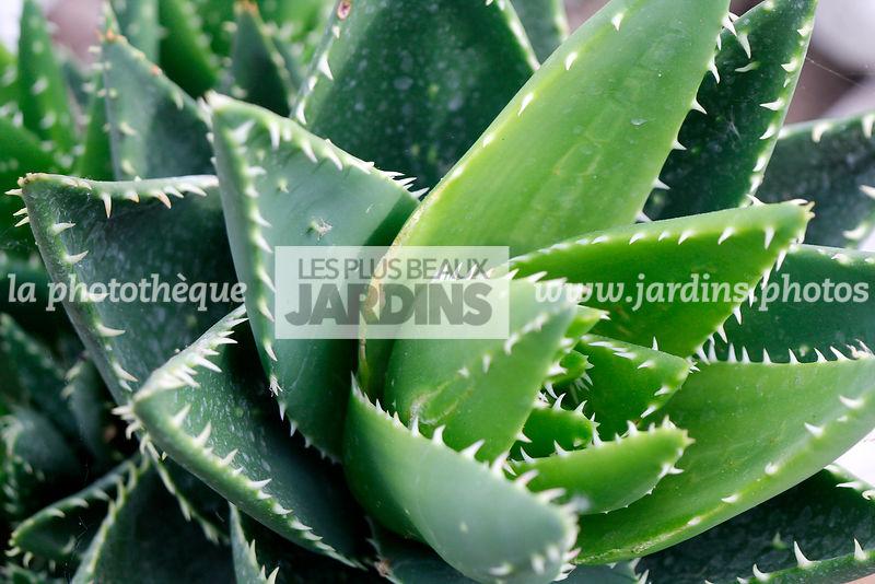 plante exotique synonyme