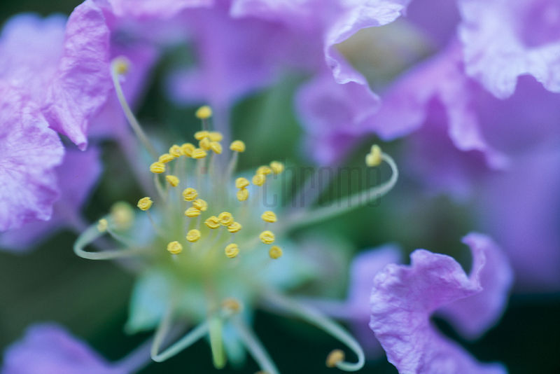 Where in the world lifestyle culture landscapes cityscapes purple flower and yellow stamen mightylinksfo